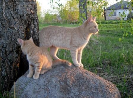 Механические приспособления для ловли кошек
