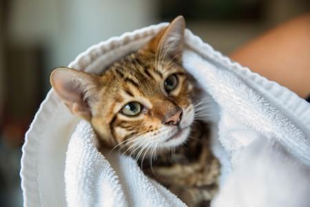 Как правильно очистить кошку