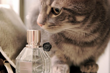 Запахи, которые не любят коты