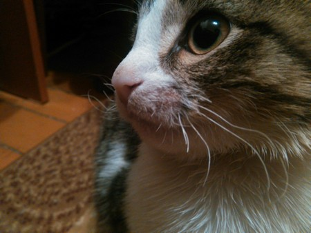 Как помочь животному, которое потеряло свои усы