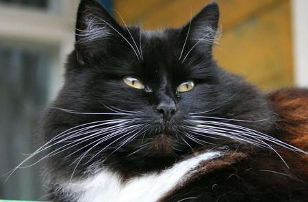 Почему у кота выпадают усы – причины