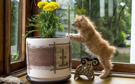 Почему нужно отучать кота есть комнатные цветы