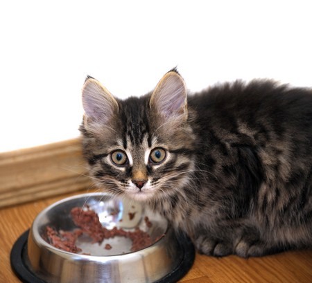 Как приучить котенка есть из миски