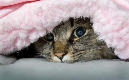 Кошка гадит на ковер