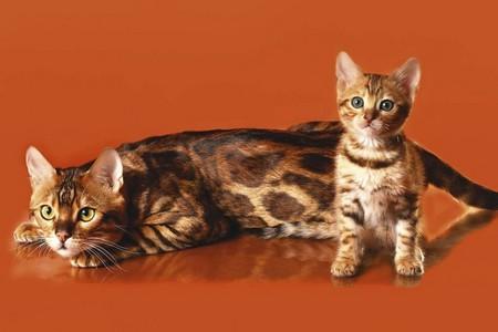 На что стоит в первую очередь обратить внимание при выборе кошки
