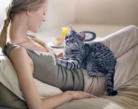 Методы влияния на кошку
