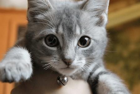 Что будет, если коту обрезать усы