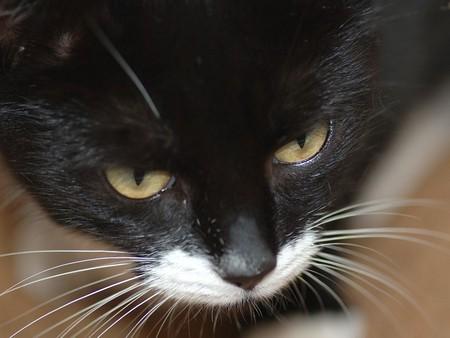 Зачем котам нужны усы