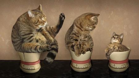Как понять, какой вес у кота